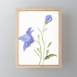 purple platycodon gradiflorus flower wateroclor Framed Mini Art Print
