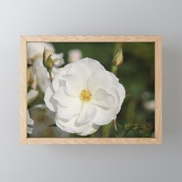 White Flowers and Buds by Reay of Light Photography Framed Mini Art Print