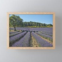 Lavender fields, Provence, France Framed Mini Art Print