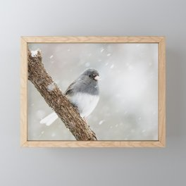 Dark-eyed Junco Framed Mini Art Print