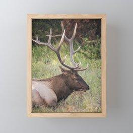 Wildlife Framed Mini Art Print