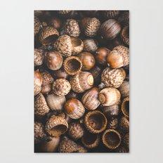 Squirrel Harvest Canvas Print