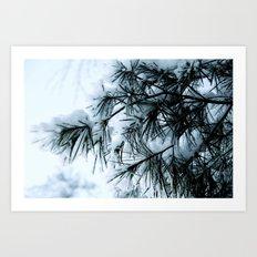 Snow Laden Pine - A Winter Image Art Print