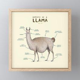 Anatomy of a Llama Framed Mini Art Print