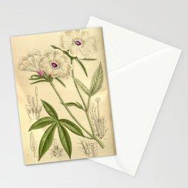 Flower 8806 ipomoea pes tigridis longibracteata Stationery Cards