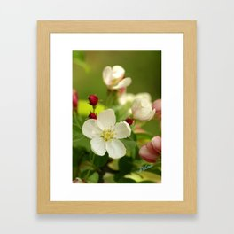 Budding trees Framed Art Print