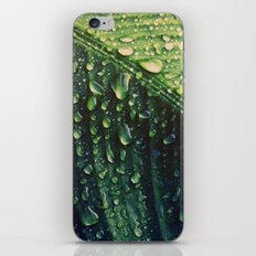 Wet leaf iPhone & iPod Skin