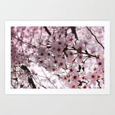 Sakura in Kyoto Art Print