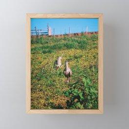 Siriemas Framed Mini Art Print
