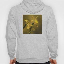Golden Yellow Daffodils Hoody
