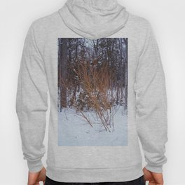 Bright Young Tree -  Fire Bush Hoody