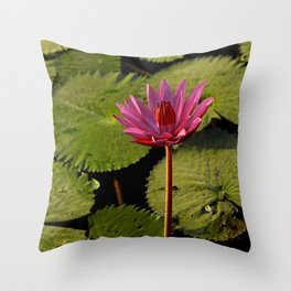 Flower at Angkor Wat Throw Pillow