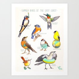 Summer Birds of the East Coast Art Print