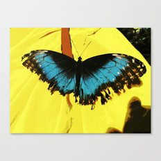 Butterfly Test Canvas Print