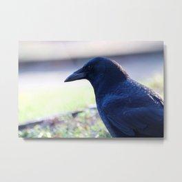 Crow Close-up Metal Print