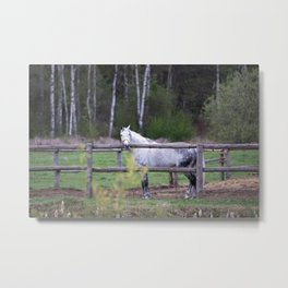 horse by Angelina Metal Print