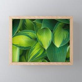 Hosta Camouflage Framed Mini Art Print