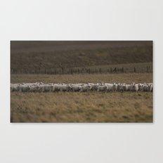 Round-up Canvas Print