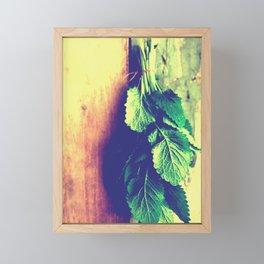 Lemon Balm interior Framed Mini Art Print