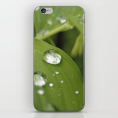 Green Leaves After Rain iPhone & iPod Skin