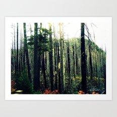 Desolate Forest Art Print