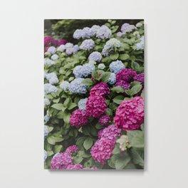 Beautiful Pink Hydrangeas Metal Print
