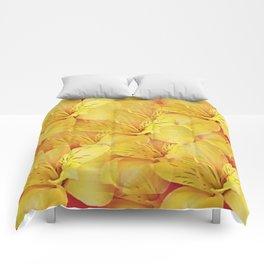 Glory Comforters