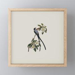 Fork-tailed Flycatcher Bird Illustration Framed Mini Art Print