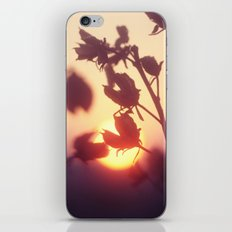 Garden Sunset iPhone & iPod Skin