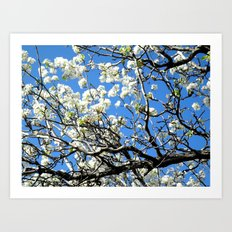 Dogwood in the sky Art Print