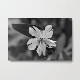 Black and white, white cockle Metal Print