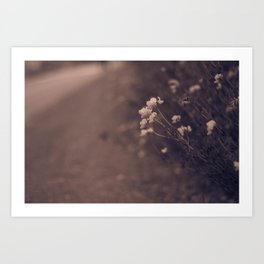 Flowers and Paths Art Print