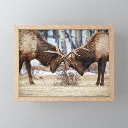 ELK IN RUT COLORADO ROCKY MOUNTAIN NATIONAL PARK WILDLIFE NATURE PHOTOGRAPHY Framed Mini Art Print