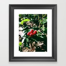 Spider Fruit Framed Art Print