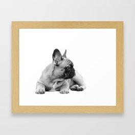 FrenchBulldog Puppy Framed Art Print