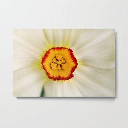 Painted Daffodil Macro Metal Print
