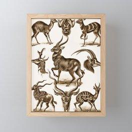 Ernst Haeckel Antilopina Antelope Framed Mini Art Print