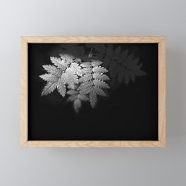 Ferns on Black Framed Mini Art Print
