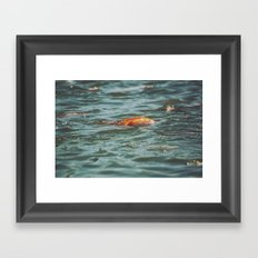 Fish, Borneo Framed Art Print