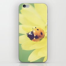 A Flower for My Lady iPhone & iPod Skin