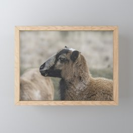 Barbados Blackbelly Sheep Profile Framed Mini Art Print