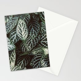 Botanical Gardens Zebra Leaf #398 Stationery Cards