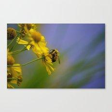 St. Croix Bee Canvas Print