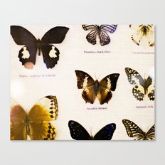 Forever Beautiful Butterfly Canvas Print