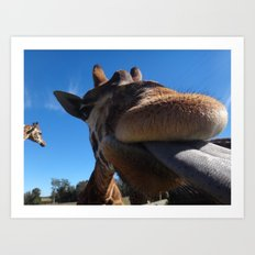 Giraffe lick Art Print