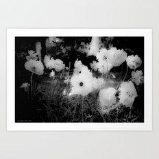 Poppy Bloom Art Print