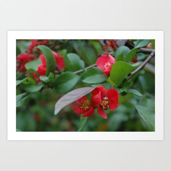 dear japanese rose Art Print