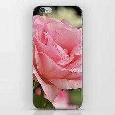 Pink wet rose iPhone & iPod Skin