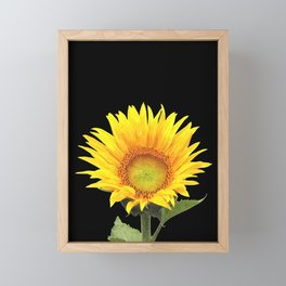 Sunflower Framed Mini Art Print