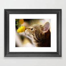Tabby and the Flower Framed Art Print